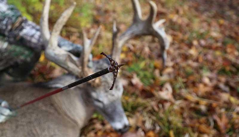 Best Broadheads for Elk Hunting